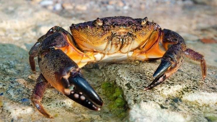 Florida's red tide blamed